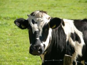 Nieoficjalnie. Piątka dla zwierząt nie została notyfikowana w KE, w związku z czym jej przepisy są niestosowalne