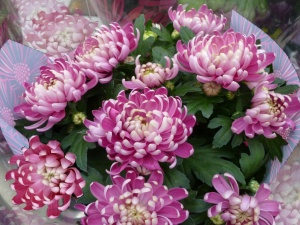 Min. Błaszczak: Poleciłem kupno co najmniej 15 tys. wiązanek i tym samym wsparcia sprzedawców kwiatów