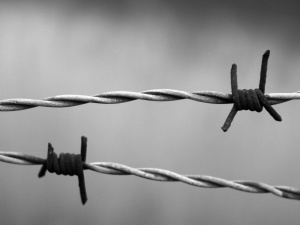 Raport IHRA: Zacieranie odpowiedzialności Niemiec jest zniekształcaniem pamięci o Holokauście