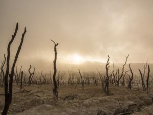 """Plagi Europy? Takich suszy nie było od czasów Imperium Rzymskiego. """"Katastrofalny wpływ"""""""