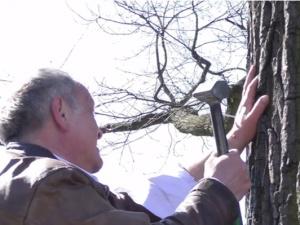 [Video] Mężczyzna przybił się w Wielki Piątek do jednego z drzew. Wstrząsający protest w Gnieźnie