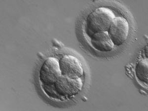 Ordo Iuris: Liczne wady w sprawozdaniu Ministerstwa Zdrowia z wykonania ustawy o in vitro