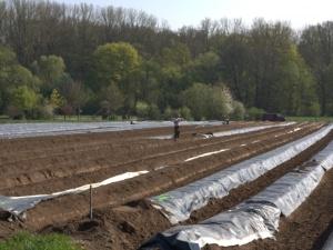 Kamil Grover: Niemcy, szparagi i imigranci