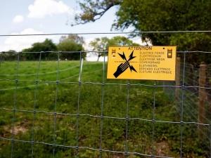 Na granicy z Polską Niemcy postawią 120-kilometrowy, elektryczny płot