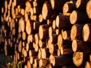 Wycinka drzew na nowych zasadach