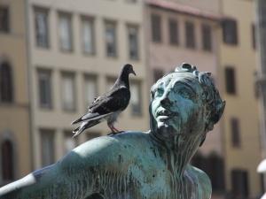 """Obrzeżki gołębie - """"ptasie"""" kleszcze – groźne również dla ludzi"""