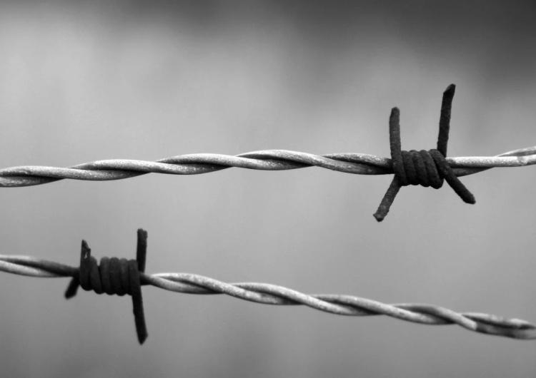 drut kolczasty [Tylko u nas] Syn Więźnia Auschwitz: Bartoszewskiemu juniorowi odpowiadam, za nominację Beaty Szydło dziękuję