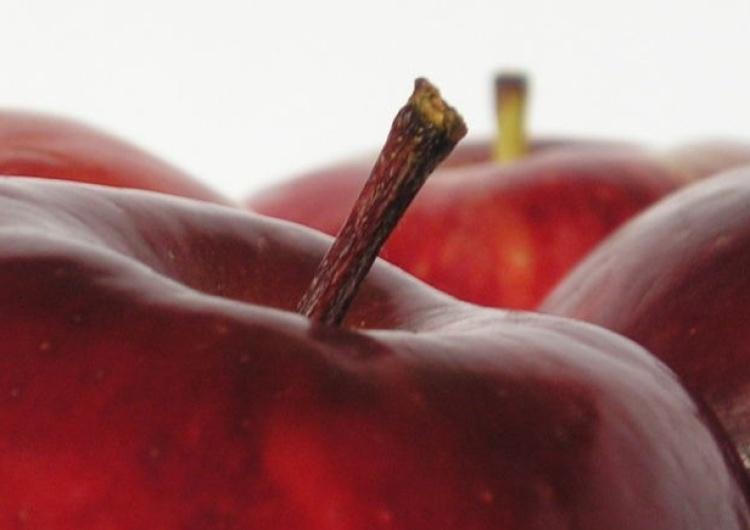 jabłka Marcin Brixen: Czyj ból jest lepszy czyli owocobus