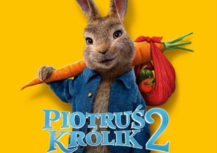Piotruś Królik 2 Na Gigancie Urwis powróci do kin 18 czerwca!