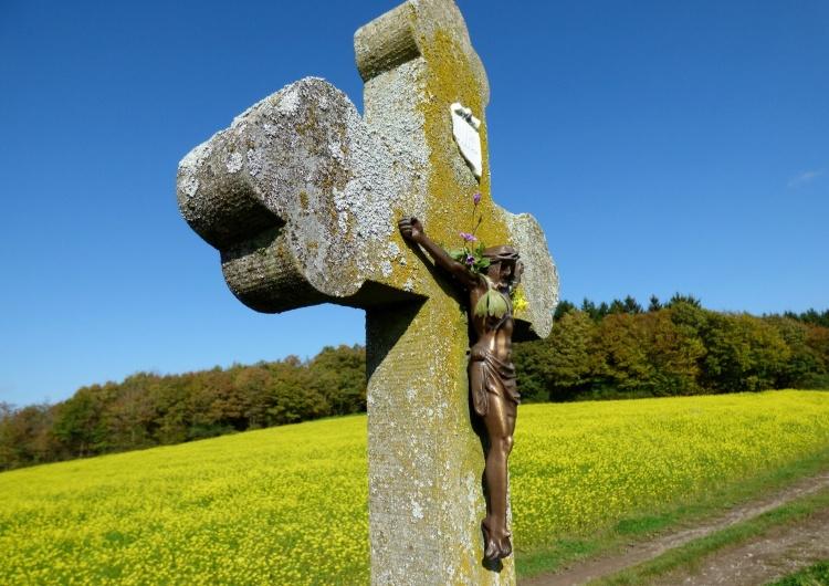 krzyż, pole rosnącej gorczycy [video] Ewangelia na XI Niedzielę Zwykłą z komentarzem