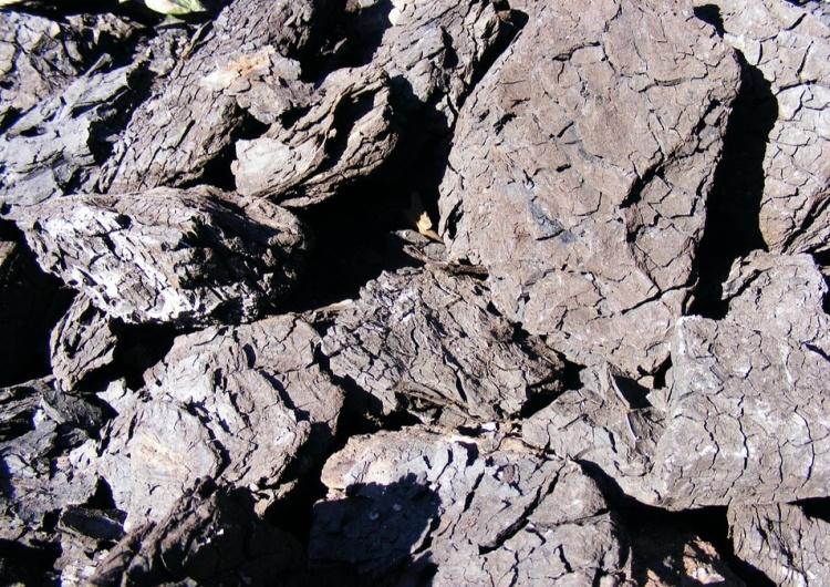 węgiel brunatny [INFOGRAFIKA]