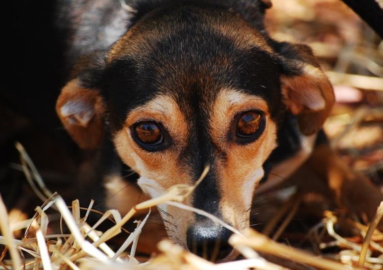 Wielkopolskie: Pożar schroniska dla zwierząt, nieżyją psy. Fundacja apeluje o pomoc