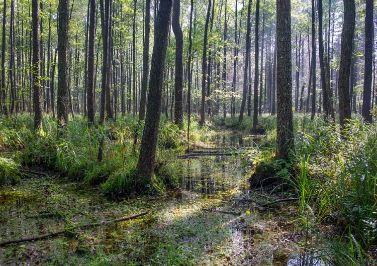 Komitet UNESCO wezwał do natychmiastowego zaprzestania wycinki drzew w Puszczy Białowieskiej